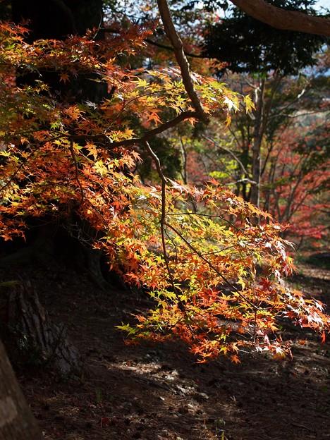 晩秋に輝く秋色