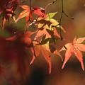 晩秋の秋色
