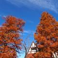 晩秋の青空を仰ぐ
