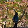 晩秋の色に包まれて