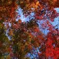 散りばめられた秋色