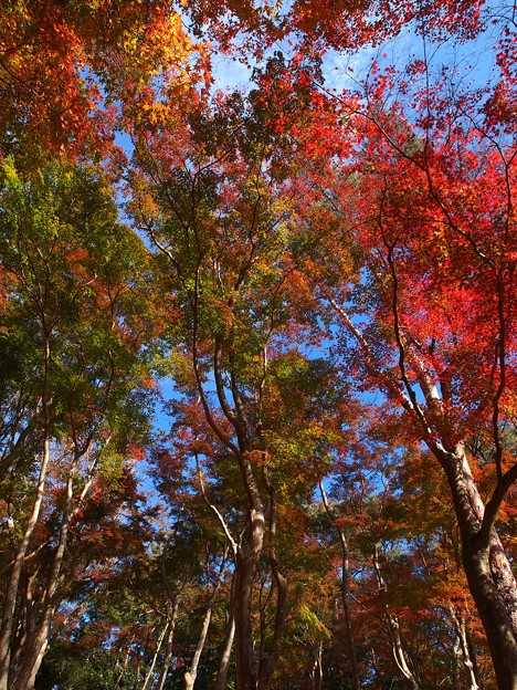 そびえる秋色