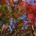 Photos: そびえる秋色