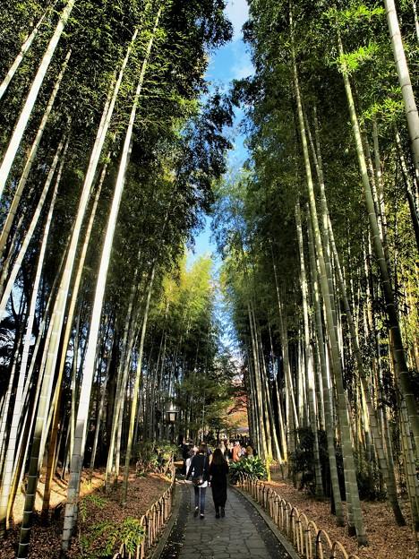晩秋の竹林の小径