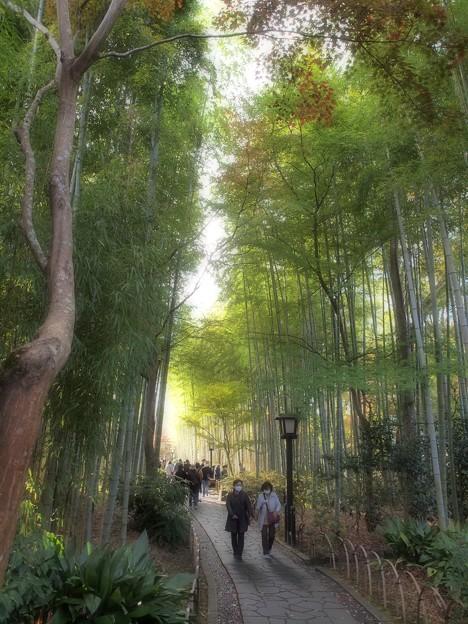 コロナ渦の竹林の小径