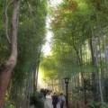Photos: コロナ渦の竹林の小径