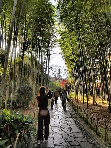 晩秋の竹林