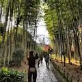 Photos: 晩秋の竹林