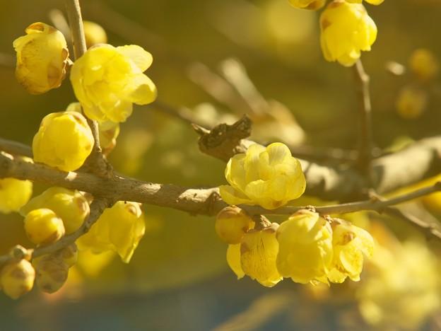 新春の香り