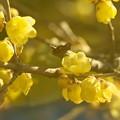 Photos: 新春の香り