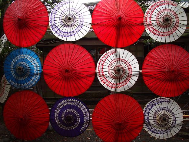晩秋の陽光を透かして和傘