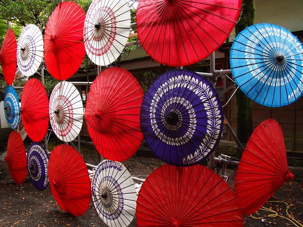 和傘ファミリーだよ、全員集合~