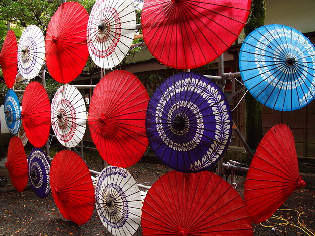 Photos: 和傘ファミリーだよ、全員集合~