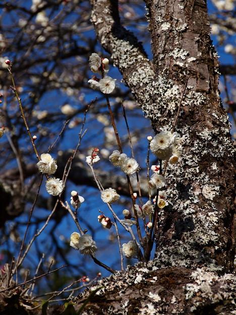 立春を告げる