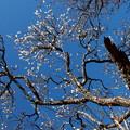 熱海の青い空