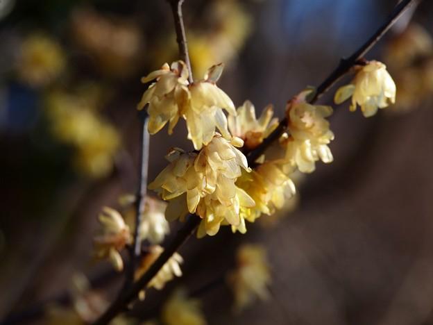 立春の香り