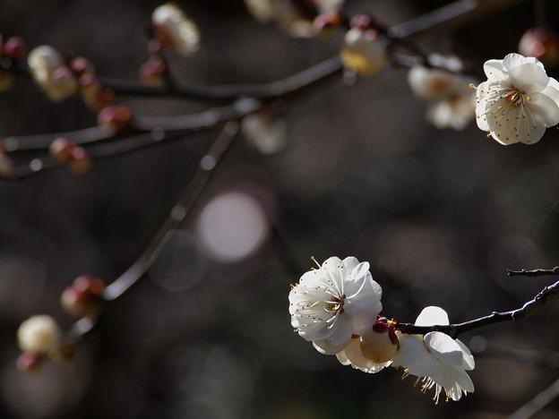 早春の陽光