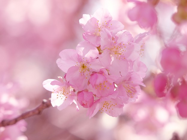 温水地に春は訪れ 2021-c