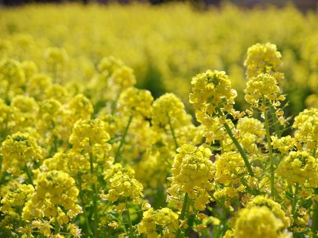 春の色・春の香り