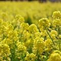 Photos: 春の色・春の香り