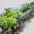 ガーデンフェンス4
