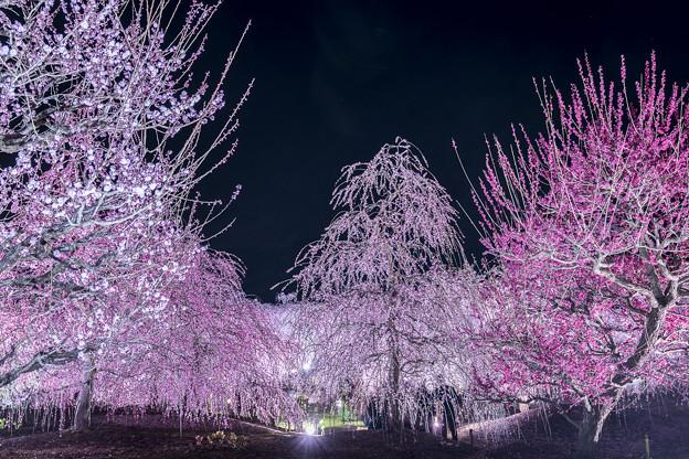 写真: 華やかな早春の夜