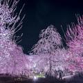 Photos: 華やかな早春の夜