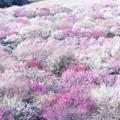 写真: 梅の競演