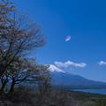 写真: 桜一片