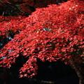Photos: 紅葉