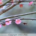 Photos: 三連単