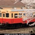 Photos: 入線