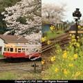 Photos: 春と言えば