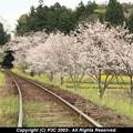 Photos: 駅で花見