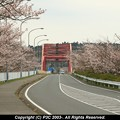 Photos: 橋はピンクではなく朱色