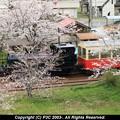 春を満喫トロッコ列車