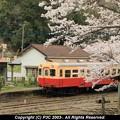 Photos: 桜の向こうに