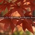 Photos: HP3C_2912