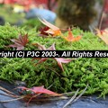 Photos: HP3C_2880