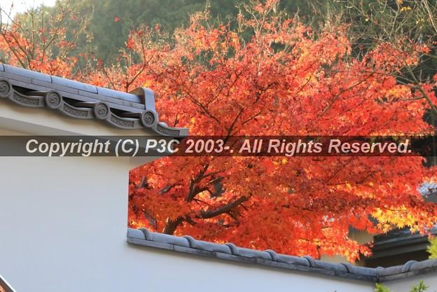 Photos: HP3C_2934