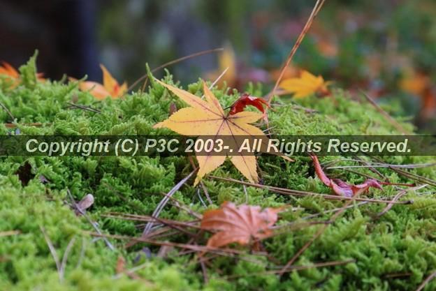 Photos: HP3C_2885