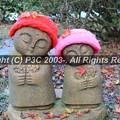 Photos: HP3C_3036