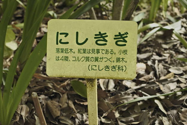 _DSC0152[にしきぎ 説明]