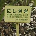 Photos: _DSC0152[にしきぎ 説明]