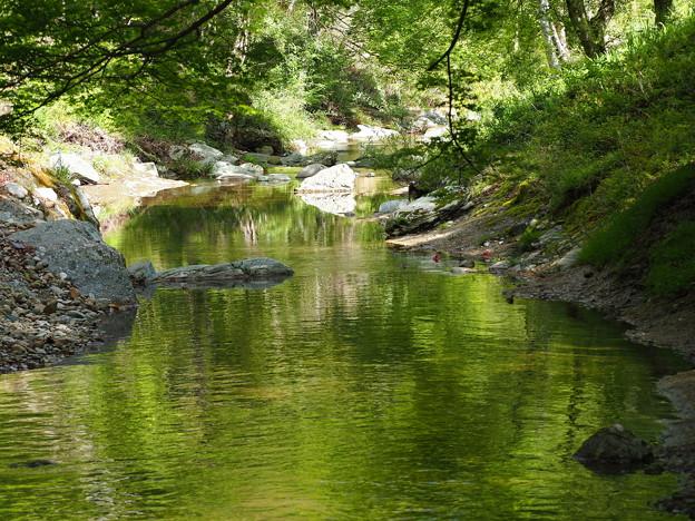 緑を映す直瀬川