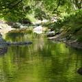 Photos: 緑を映す直瀬川