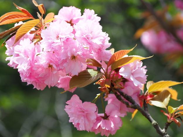 久万高原の春