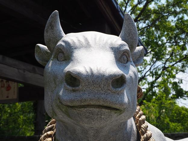 神社の守り牛