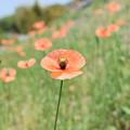 Photos: 優しい花