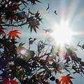 Photos: 秋晴れの公園